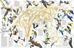 Bird Migration Eastern Hemisphere  -  Published 2004 Map