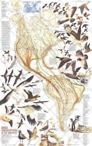 Bird Migration in the Americas  -  Published 1979 Map