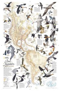 Bird Migration, Western Hemisphere Map