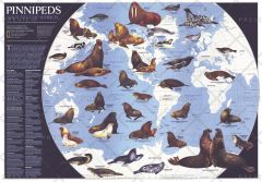 Pinnipeds Around the World  -  Published 1987 Map