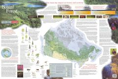 The Boreal Forest Map